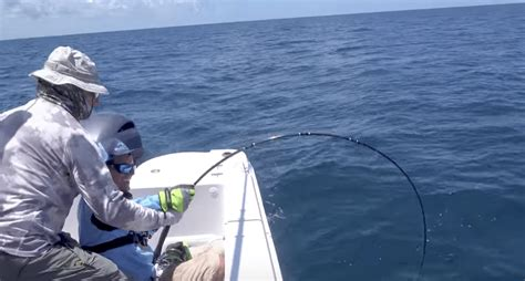 grouper goliath catch fly actually