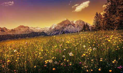 switzerland, Mountains, Dandelions, Scenery, Grasslands ...