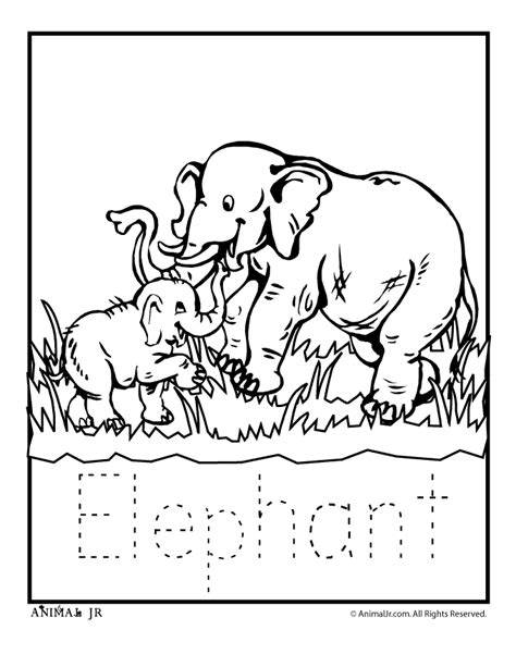 zoo animal coloring pages zoo babies zoo babies elephant