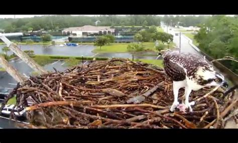 the cooler 5 lessons for live animal cams cool green