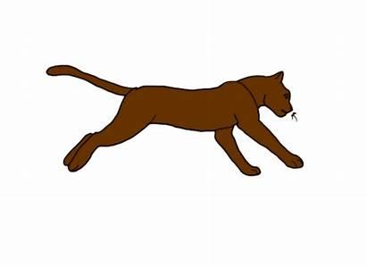 Running Cat Animated Cartoon Animation Clipart Run