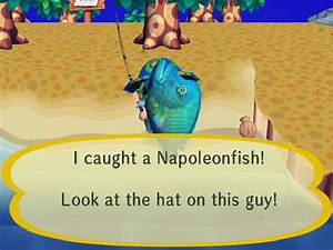 Napoleonfish Animal Crossing Wiki Fandom Powered By Wikia