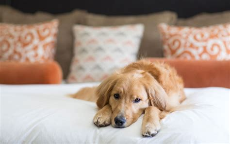 the best hotels for a vacation with your dog travel