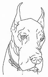 Coloring Dogs Dane Colouring Dog Adult Danes Drawings Printable Animal Drawing sketch template