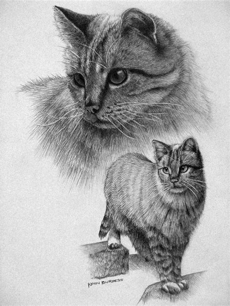 great examples  cute  majestic cat drawings tail