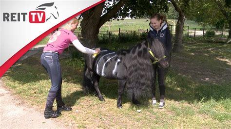pferdepflege fliegenschutz fuer das pferd youtube