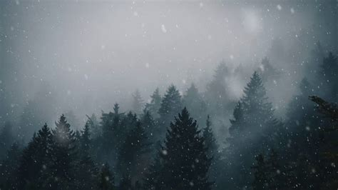 animated forest snow  wallpaper engine