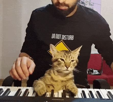 cat enjoys relaxing  playing piano  owner boing boing