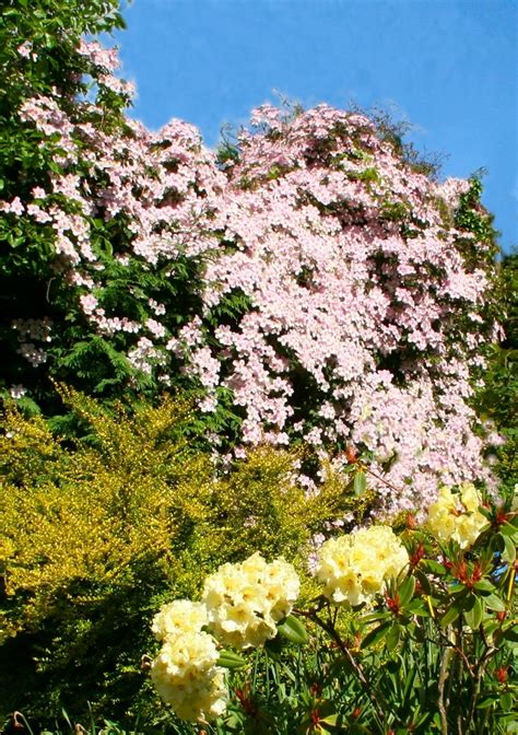 32 Best Beautiful Climbing Roses, Vines And Garden Plants