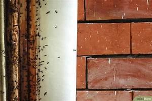 Ameisenplage Im Haus : eine ameisenplage im haus bek mpfen wikihow ~ Orissabook.com Haus und Dekorationen