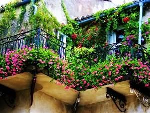 Tomaten In Der Wohnung : kletterpflanzen f r balkon 27 super ideen ~ Lizthompson.info Haus und Dekorationen