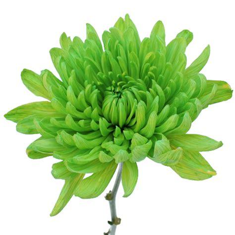 lime green wedding flower