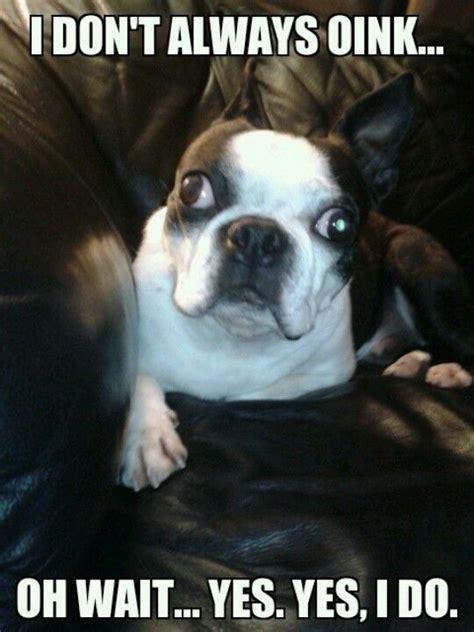 Boston Terrier Meme - rufus surreal life of my dogs pinterest
