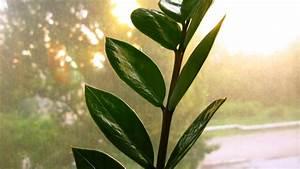 Pflanzen Für Wenig Licht : pflanzen wenig licht pflanzen f r wohnr ume mit wenig licht gartenblog wyss zimmerpflanzen f r ~ Sanjose-hotels-ca.com Haus und Dekorationen