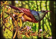 Faber-Castell Pencil Colors for Kingfisher Bird
