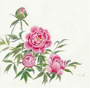 Image Gallery japanese peony drawings