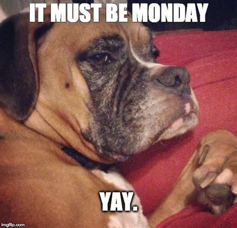Monday Dog Meme - it must be monday yay imgflip