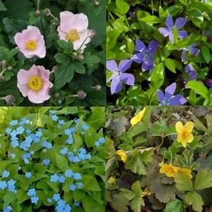 Pflanzen Für Den Schatten : winterharte pflanzen sonderangebote stauden paket mit 10 pflanzen f r den schatten ~ Sanjose-hotels-ca.com Haus und Dekorationen