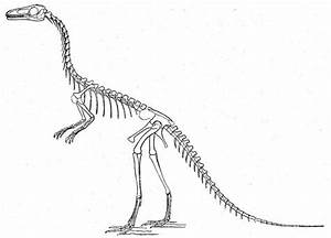 dinosaur skeleton pictures With printable dinosaur skeleton template