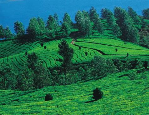 Top 5 Tourist Places in India to travel in summer ~ You Must See India