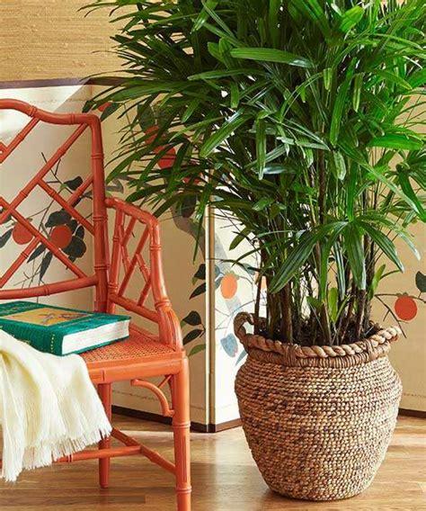 plante dans une chambre quelle plante pour quelle pi 232 ce de votre int 233 rieur