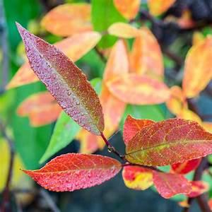Die Farben Des Herbstes : die farben des herbstes nordw rts ~ Lizthompson.info Haus und Dekorationen