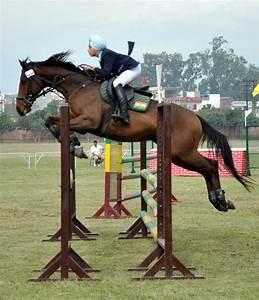 Pap Corse : host club steals the horse show ~ Gottalentnigeria.com Avis de Voitures