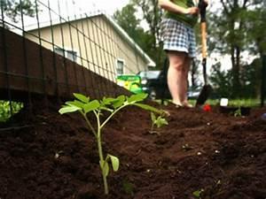 Planter Des Graines De Tomates : tomates bac tout ~ Dailycaller-alerts.com Idées de Décoration