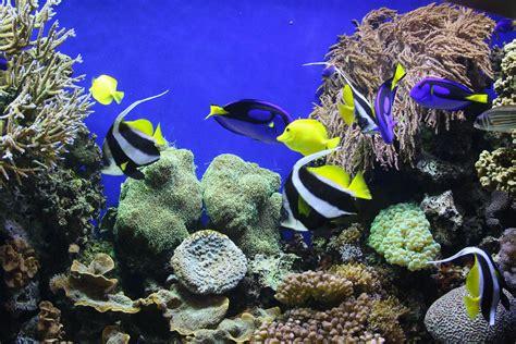 fond d 233 cran hd poissons tropicaux gratuit fonds 233 cran
