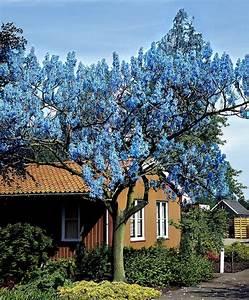 1000+ Ideen zu Blauglockenbaum auf Pinterest Iphone 6