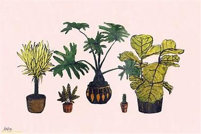 Aesthetic Plant Laptop Wallpapers Backgrounds Panda Wallpaperaccess