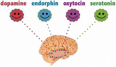 Happiness Hormones Brain Hormone Activities Darn Worked
