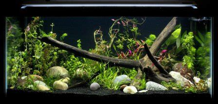 Amazon.com : Finnex FugeRay Aquarium LED Light Plus
