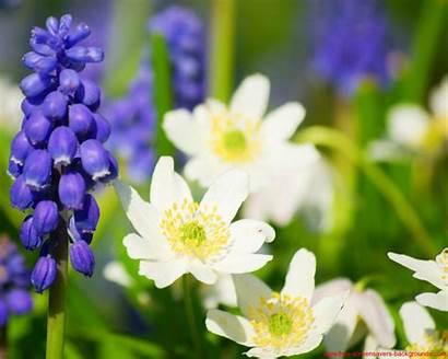 Screensavers Spring Flores Primavera Flowers Flower Backgrounds
