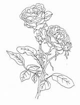 Compass Coloring Rose Pages Getcolorings Sheet Getdrawings Printable sketch template
