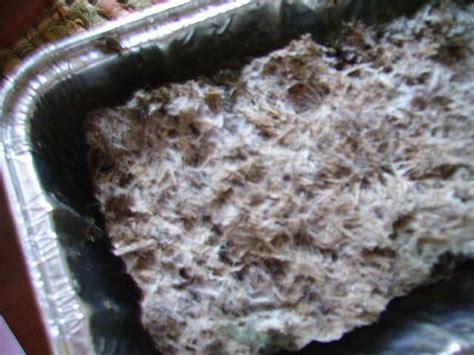 bulk substrate recipe kikielpijiorg