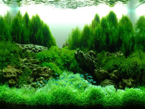Aquascape Ideas  Bruin Blog