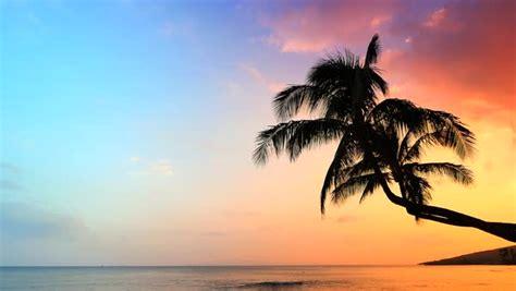 tropical background palm trees  tropical sea beach