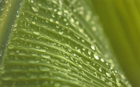 nk leaf rain summer green bokeh wallpaper