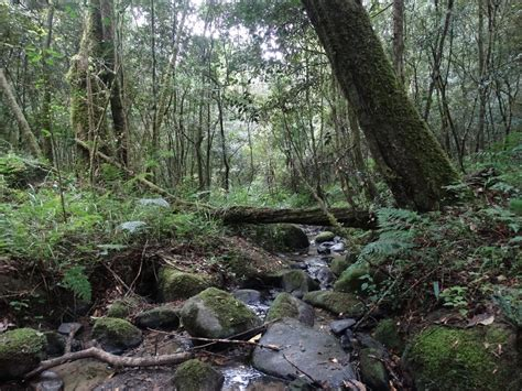researchers investigate decline  south africas forest