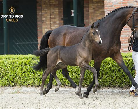 Top-Class Foals with High Potential for Dressage in ...