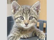Nachbars lustige Katzenfotos und Katzenbilder Teil 4