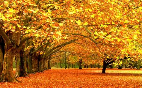 why do trees change color why do leaves change color in the fall inexpensive tree