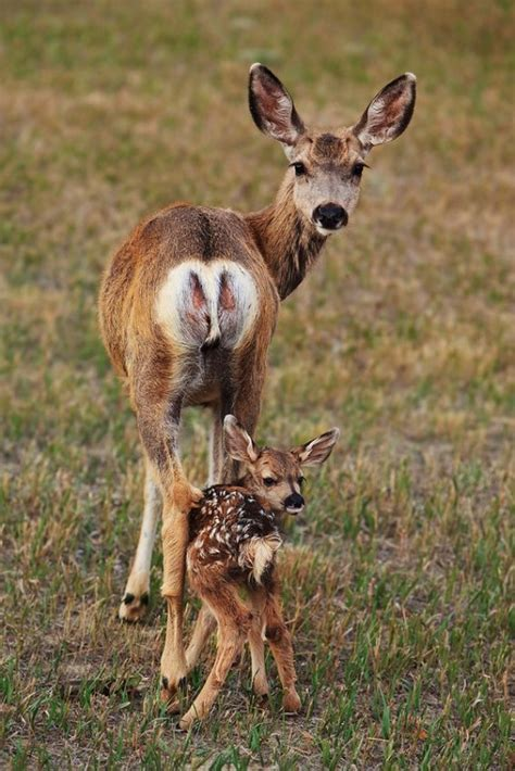 35 Amazing Cute Baby Animal Pictures