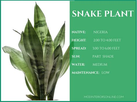 Snake Plant Benefits Best Houseplants For Your Home Promoting Clean Air And