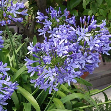 Garten Pflanzen Im Juli by Welche Blumen Im Juli Pflanzen Welche Blumen Kann