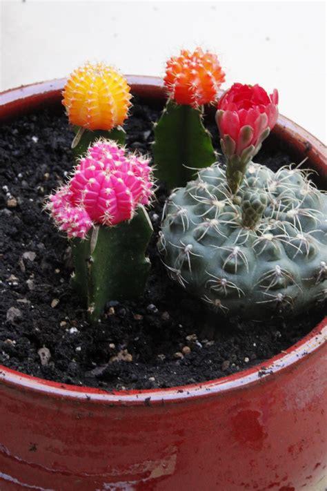 cactus dish garden diy cactus dish garden hgtv