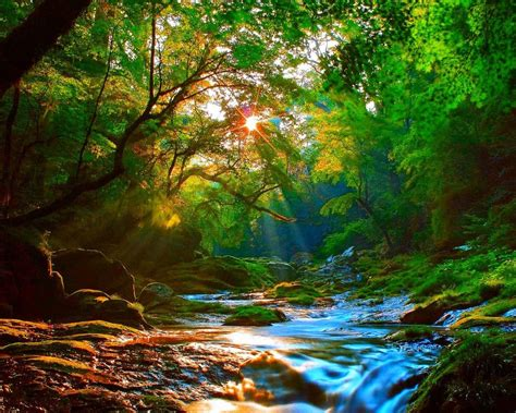sunrise beautiful mountainous river forest  green