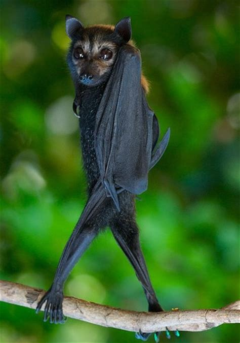 flipping   bats   exceptionally sassier