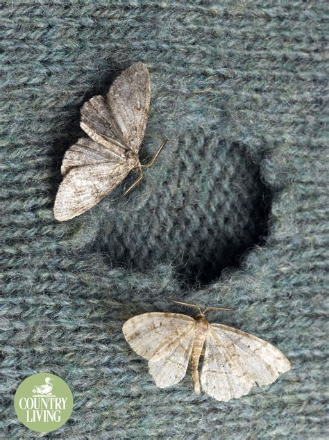How To Get Rid Of And Prevent Moths In The Home